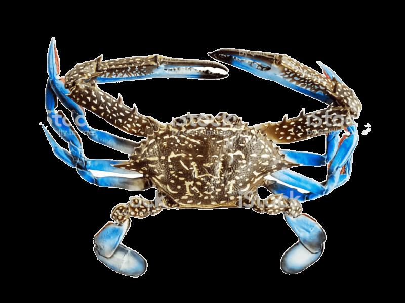 Blue Swimming Frozen Crab